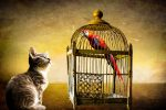 Tips for Proofing Your Birds Cage from Your Cats and Dogs